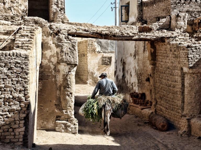 Oasis Al Qasr 04 768x576